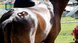 Один из участликов Олимпийских игр украсил круп своей лошади эмблемой олимпийских игр в Рио