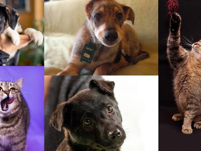 Временно на Кристалле: собаки и кошки из приютов приедут знакомиться