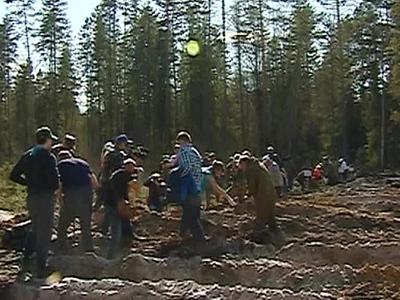 Кировчане массово сажают деревья