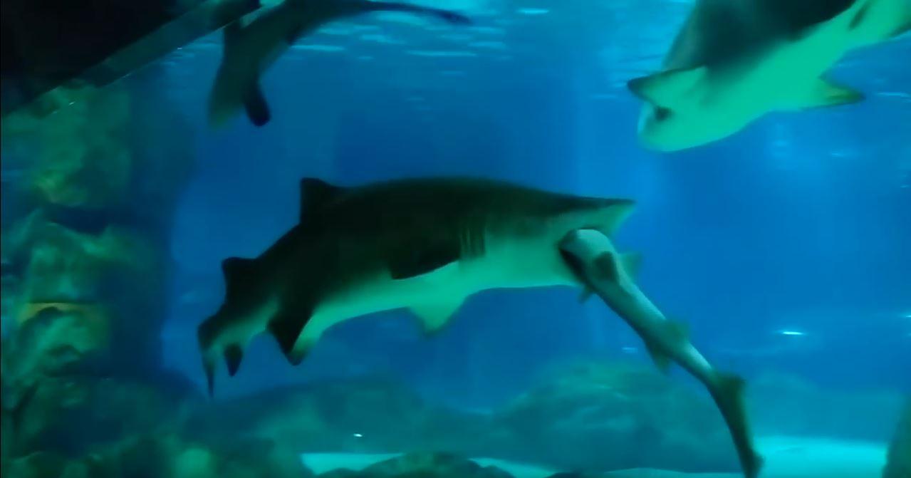 Секс у акул 1 фотография