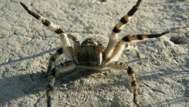 Из чего делают паук