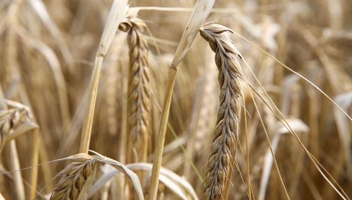 Турция ввела пошлины на ввоз зерна из России