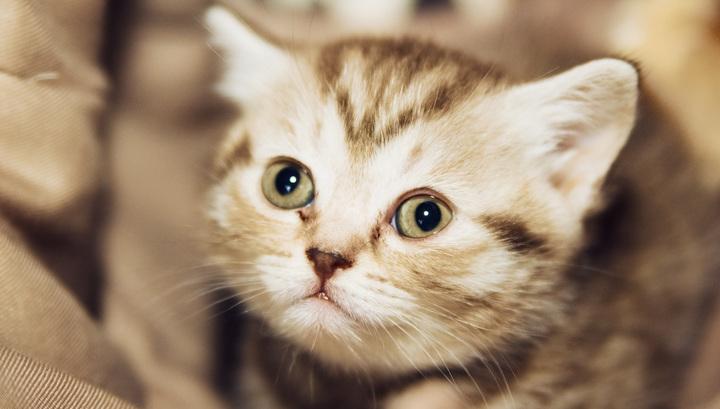 В Кисловодске из-за слепого агрессивного котенка пришлось вызывать спасателей