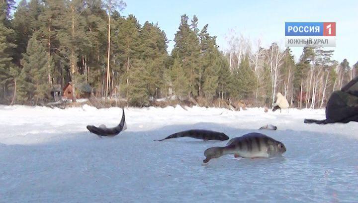 россия рыбалка челябинская область