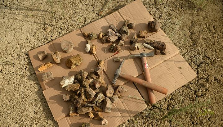Останки плезиозавра, который вымер более 60 млн. лет тому, были найдены исследователями из Урала