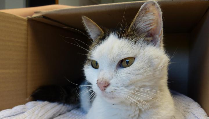 Потерявшуюся в Швейцарии кошку нашли через год в 600 километрах от дома