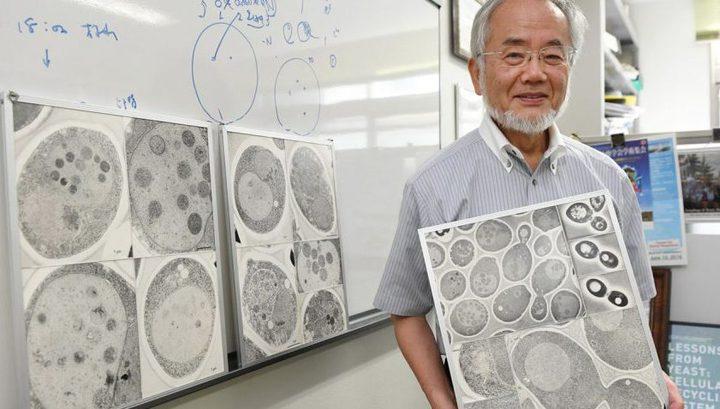 Нобелівська премія з біології 2016 дісталася японському вченому