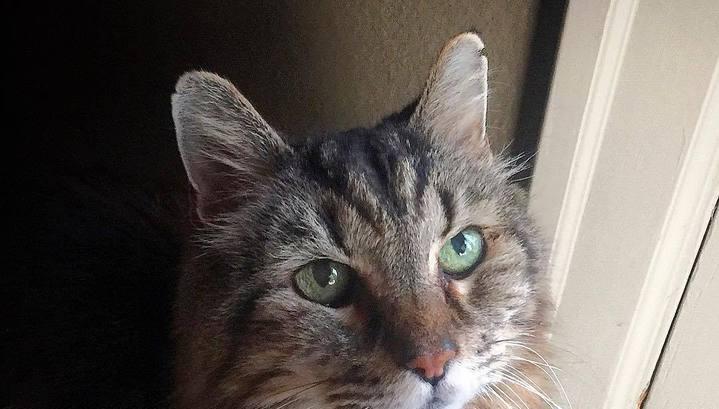 Почему кот уходит из дома надолго