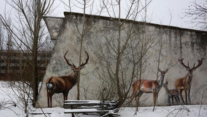 Власти Киева подумывают использовать Чернобыль в качестве свалки