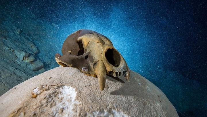 Пещера тысячи лет хранила останки невероятных животных