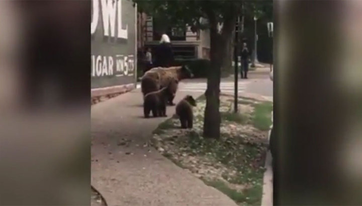 """В Колорадо прошел """"дождь"""" из медведей. Видео"""