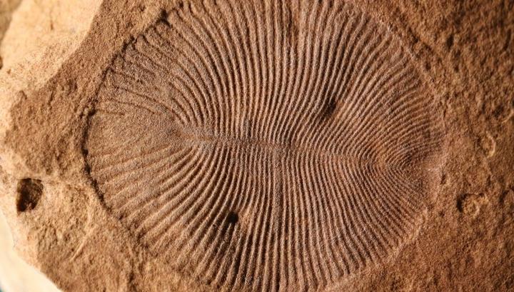 После 70 лет споров палеонтологи идентифицировали загадочную окаменелость