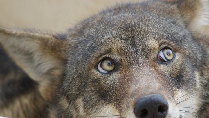 скачать торрент глаз волка - фото 3