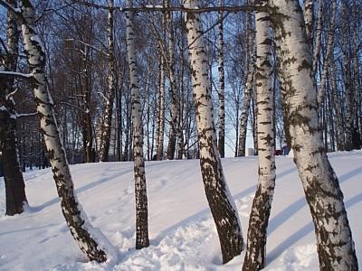 В Центральную Россию придут морозы