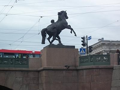 Жители Санкт-Петербурга раскупают шторы
