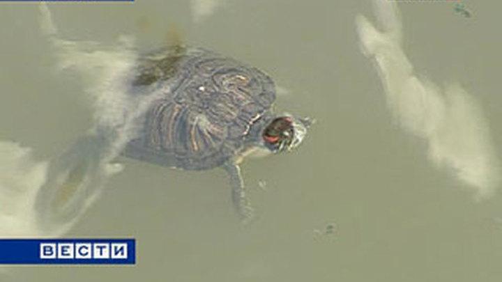 Программу turtle информатике по