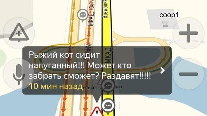 Московские автомобилисты спасли напуганного кота (рыжего!)