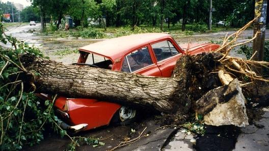 Как наказать коммунальщиков за упавшее на машину дерево: разъяснения ВС РФ