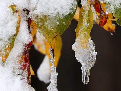 """""""Меньше пить, больше спать"""": москвичей ждут перепады давления и снегопады"""