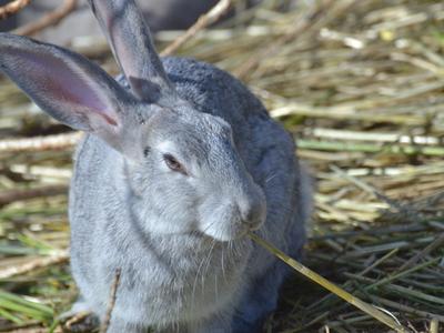 После нападения кролика на ребенка в Москве закрыли контактный зоопарк