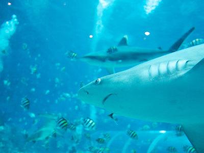 Австралийский серфингист стал жертвой нападения акулы