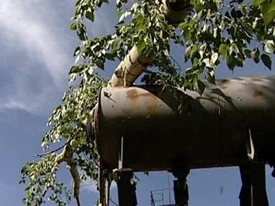 Ураган в Орловской области повалил десятки деревьев и обрушил балкон
