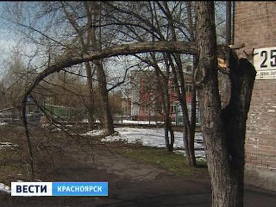 Сотни деревьев в Красноярске повалены из-за снега