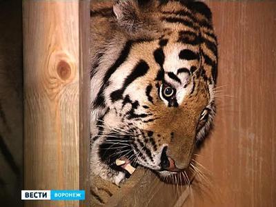 Воронеж вошёл в международную программу Евроазиатской ассоциации зоопарков
