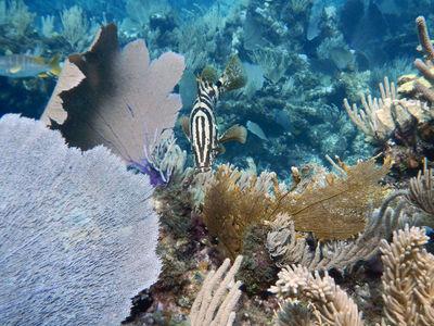В природе нет ничего лишнего: моча рыб оказалась ценным продуктом для коралловых рифов