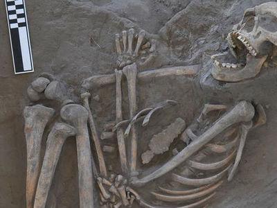 Смертельный удар бумеранга: найдена 800-летняя жертва древнего оружия