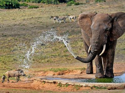 Африканским слонам не дали высший международный уровень защиты