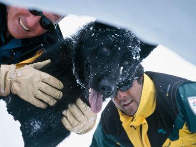 Сход лавины: поисковая операция на курорте Тинь завершена