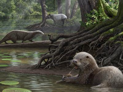 Палеонтологи обнаружили останки гигантской ископаемой выдры