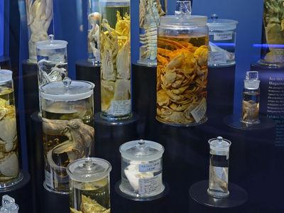 """Найден способ извлечения ДНК вымерших животных, """"замаринованных"""" в музейных коллекциях"""