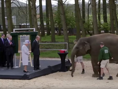 Елизавету II познакомили с названной в ее честь слонихой