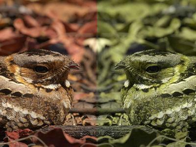 """Геймеры помогли учёным понять, как хищники распознают """"камуфляж"""" птиц"""