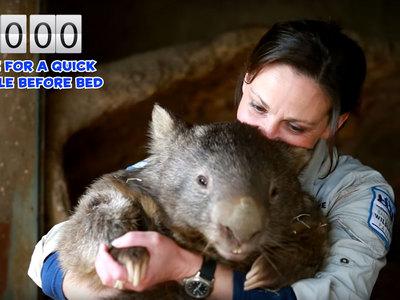 В Австралии умер самый старый вомбат