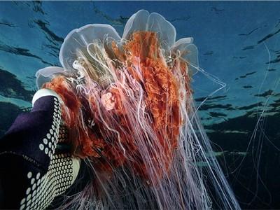 """""""Моя Планета"""" откроет зрителям подводный мир Арктики"""