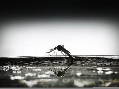 """Панцири ракообразных станут """"щитом"""" в войне против малярии"""