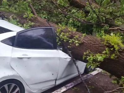 Пострадавшим от урагана: что делать, если на машину рухнуло дерево, щит или столб