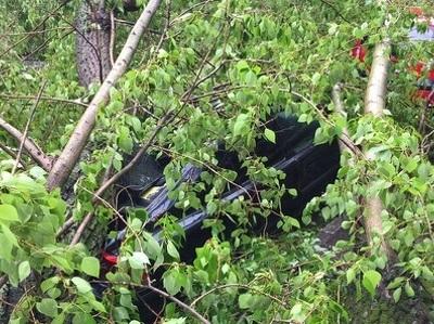 На машину ветром повалило дерево или рекламный щит: что делать?