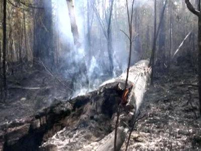Забайкалье в огне: площадь пожаров растет