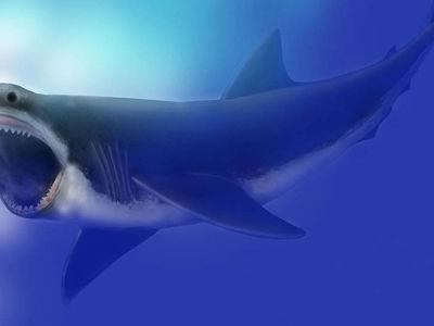 Палеонтологи назвали причину вымирания гигантских акул, наводивших ужас на морских обитателей