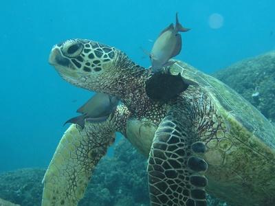 Ради спасения черепах: кожа рептилий впервые выращена в лаборатории