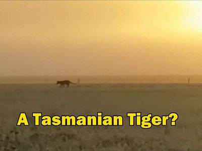 Считающийся вымершим тасманийский волк попал на видео