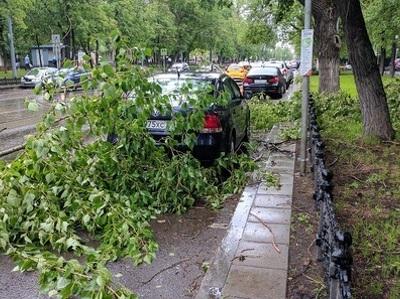 Страховщики назвали сумму ущерба от урагана в Москве