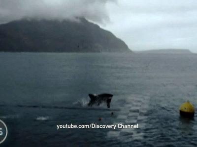 Многократный чемпион по плаванию Майкл Фелпс проиграл заплыв акуле