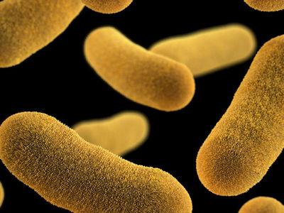 Убаюкать нельзя убить: биологи сочинили колыбельную для бактерий