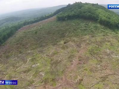 Ресурс, сравнимый с нефтью и газом. Куда уходит российский лес?