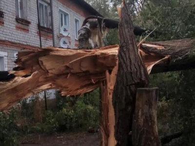 Ураган в Самарской и Саратовской областях повредил крыши 200 домов